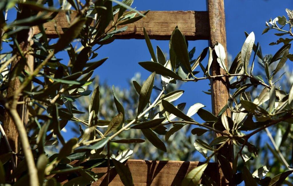 produzione olio di oliva bio umbria