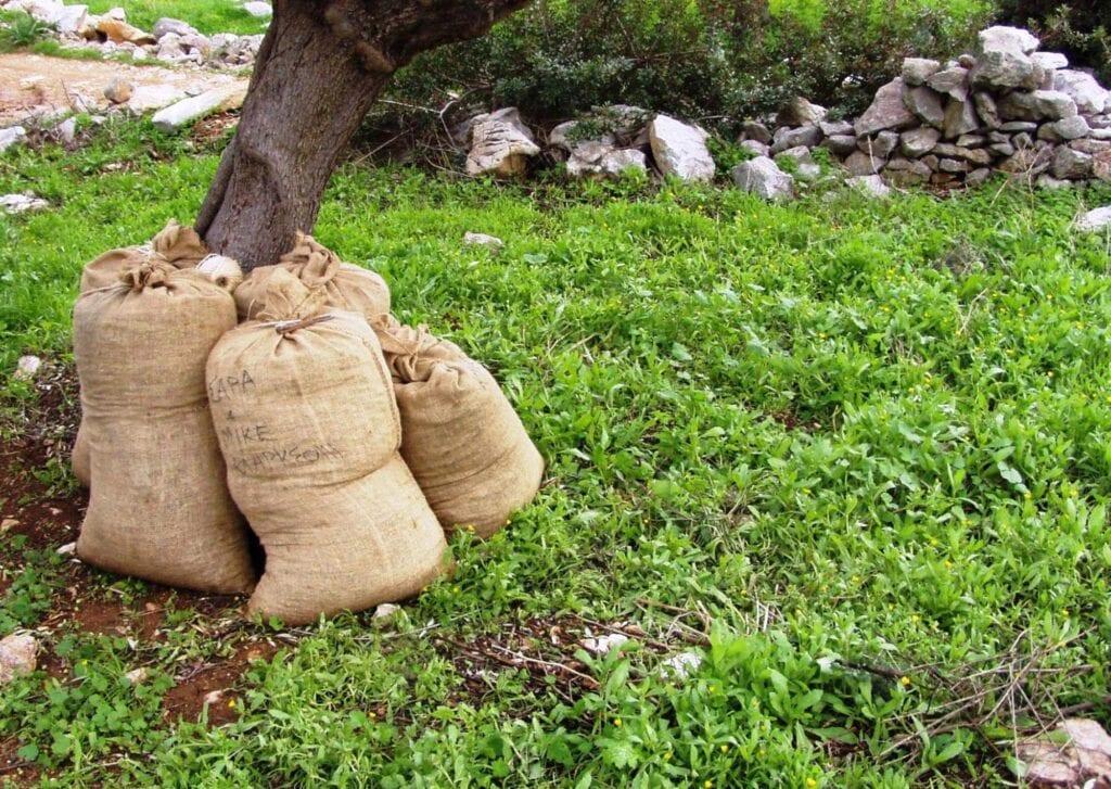 olio di oliva biologico in sacchi